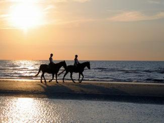Reiterurlaub auf Amrum und Pellworm