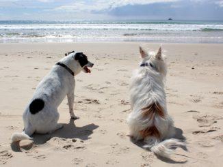 Zwei Hunde am Strand