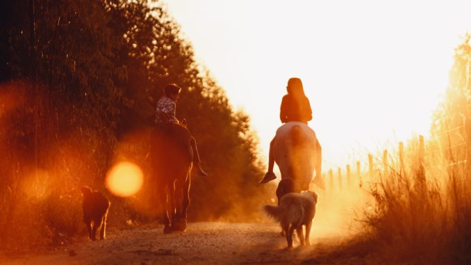 Ausritt mit Hund und Pferd