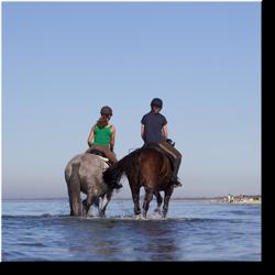 Reiterurlaub auf Amrum